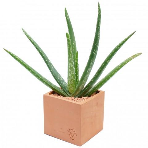 Mon Aloe Vera