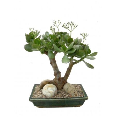 L' arbre de Jade