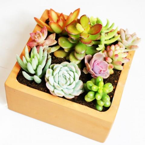 Jardin de boutures succulentes