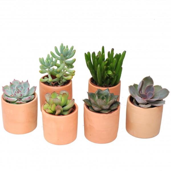 mini pot terre cuite rond 5 5 cm arr e succulentes. Black Bedroom Furniture Sets. Home Design Ideas