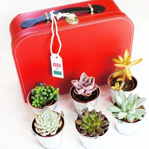 Voyage au Mexique - 6 succulentes