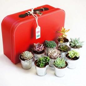 Voyage au Mexique - 10 succulentes