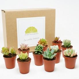 Coffret cadeau kit boutures en pots de culture