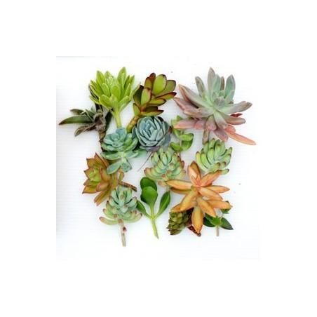Boutures variées pour tableau végétalisé