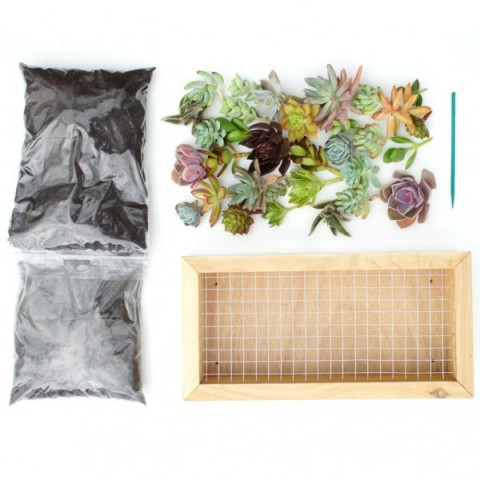 Kit tableau de succulentes - 15cm x 30cm