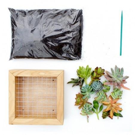 Kit tableau de succulentes - 30cm x 30cm