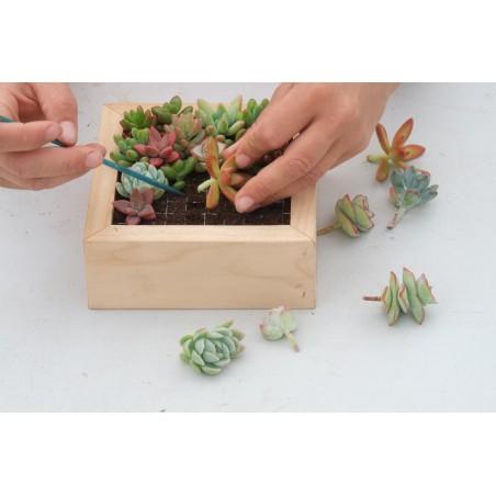Kit tableau de succulentes - 20cm x 20cm