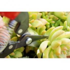Nécessaire pour succulentes