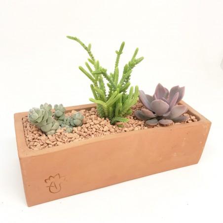 Coffret jardinière de succulentes