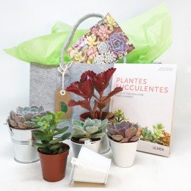 Panier succulent