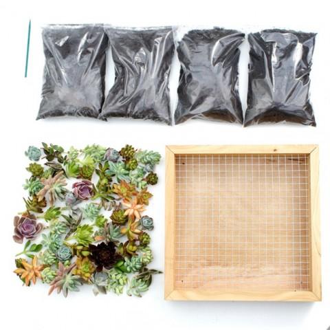 Kit Tableau de succulentes