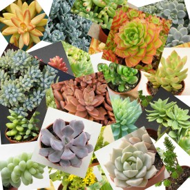 Collection de plantes mexicaines