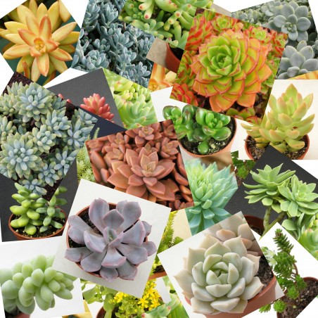 Collection de plantes mexicaines
