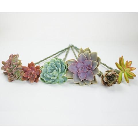 Plantes tigées