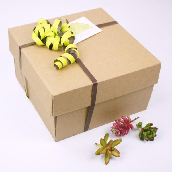 coffret cadeau kit boutures en coupe de culture arr e succulentes. Black Bedroom Furniture Sets. Home Design Ideas