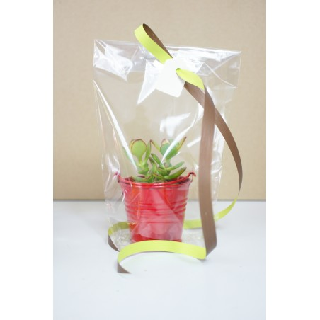 Sacs transparents - Lot de 10