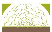 Arree Succulentes